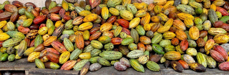 Cocoa_Vietnam_general2-1.jpg